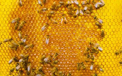 Przygotowania pszczół do zimy